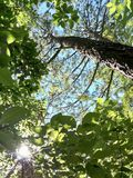Dans aux bois Image libre de droits