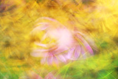 Dans av blommor, fotokonst, ljus färgrik abstr för ljusa strimmor Arkivfoto