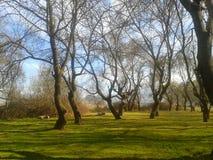 Dans av träden arkivfoto