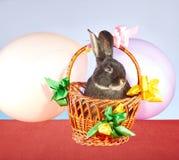 Dans décoré des rubans et du panier colorés de ballons repose le lapin Images stock