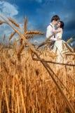 Dans des couples d'amour le jour du mariage au champ de blé Image stock