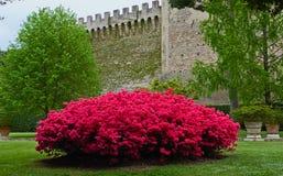 Dans des jardins de Vaticans Images stock