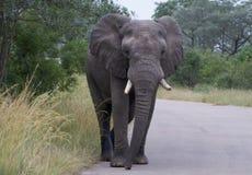 Dans l'éléphant de couleur Photos stock