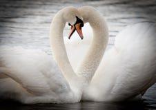 Dans l'amour Images libres de droits