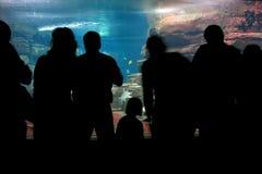 Dans l'aquarium Photos stock