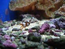 Dans l'aquarium Images stock