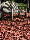 Dans l'automne photographie stock