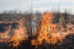 Dans l'herbe brûlante de champ, des arbustes et les usines sont brûlés, terre couverte d'obscurité, premier ressort Image libre de droits