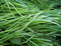 Dans l'herbe verte Photographie stock