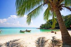 Dans l'ombre de palmier Photos stock