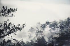 Dans la brume Photos stock