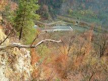 Dans la chasse de l'automne sauvage photo libre de droits