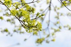 Dans la fleur Image stock