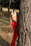 Dans la forêt Images libres de droits