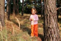 Dans la forêt Images stock