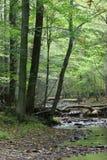 Dans la forêt photos libres de droits