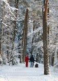 Dans la forêt photographie stock libre de droits