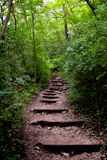 Dans la forêt Photo libre de droits