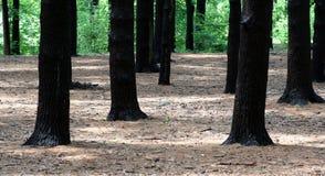 Dans la forêt Photographie stock