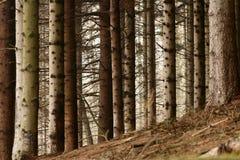 Dans la forêt Image libre de droits