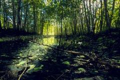Dans la forêt après l'inondation de ressort Photos stock