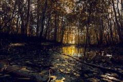 Dans la forêt après l'inondation de ressort Photographie stock