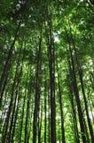 Dans la forêt d'été Images libres de droits