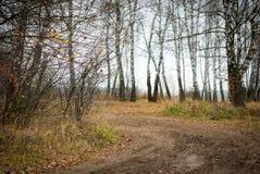 Dans la forêt d'automne photographie stock libre de droits