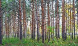 Dans la forêt d'automne Image stock