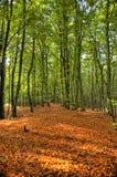 Dans la forêt de Darss Photo libre de droits