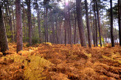 Dans la forêt de Darss Photos libres de droits