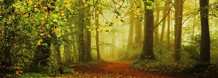 Dans la forêt en automne dans le brouillard image stock