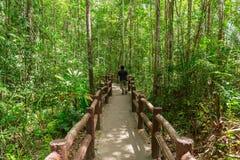 Dans la forêt, le passage couvert à Emerald Pool ou l'Emerald Lake photo stock