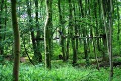 Dans la forêt s'élevante Image libre de droits