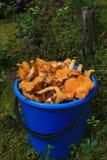 Dans la forêt sur le seau de mousse avec la chanterelle orange répand photo stock