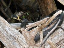 Dans la forêt, un petit serpent est chauffé photos stock