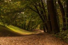 Dans la forêt Photo stock