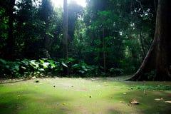 dans la jungle photos stock