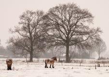 Dans la neige 1 Photographie stock