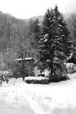 Dans la neige Photos stock