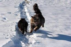 Dans la neige Photos libres de droits