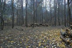 Dans la notation de forêt d'automne photographie stock