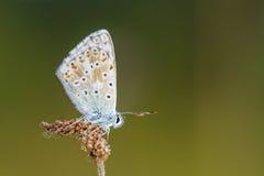 Dans la période des papillons Images stock