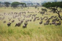 Dans la réserve naturelle Photographie stock