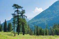 Dans la vallée de la rivière Kucherla Image stock
