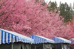 Dans la vue de fleurs de cerisier de Taïwan Images stock