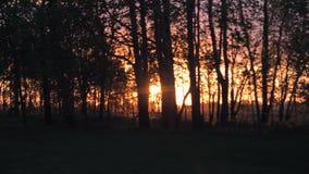 Dans la vue de mouvement des arbres sur la route par laquelle les rayons du coucher du soleil banque de vidéos