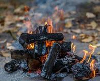 Dans le bois et le papier de brûlure du feu Photographie stock libre de droits
