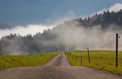 Dans le brouillard Photo libre de droits