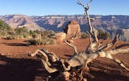 Dans le canyon Images libres de droits